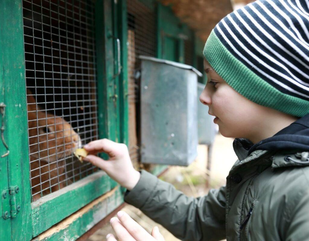 Kinderbauernhof Urlaub Tipps